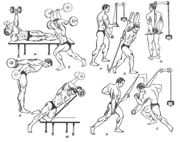 Упражнения с штангой домашних условиях в картинках